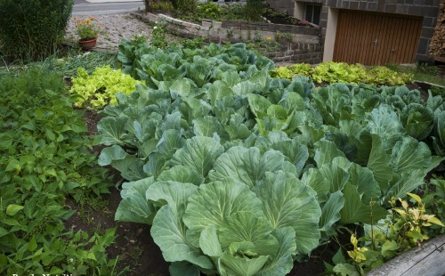 Fall Garden Guide: 15 Easy-To-Grow Vegetables