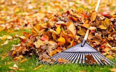 The Gardener's To-Do List for Fall