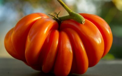 5 Reasons Why Heirloom Seeds are the Best for Gardening