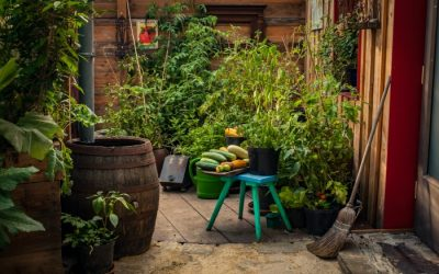 How To Grow Vegetables Year-Round in Container Gardens