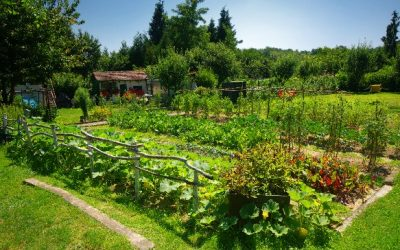 3 Reasons Why Gardening Is Good For Your Mental & Physical Well Being