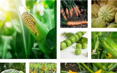 No Fuss Seeds: 10 Seeds That Love To Be Directly Sowed