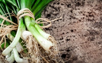 A Guide To Growing Your Best, Most Nutritious, And Flavorful Bunching Onions