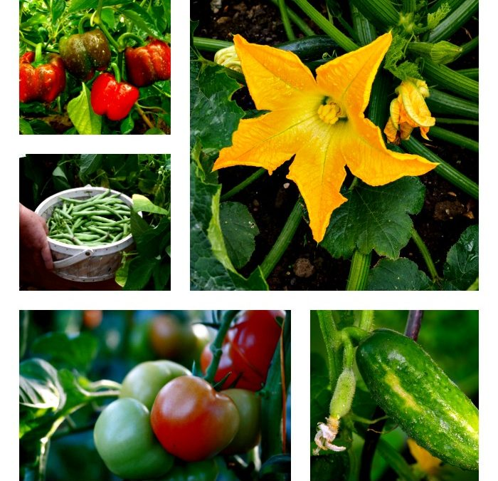 How To Double Your Harvest with a Late Summer Planting