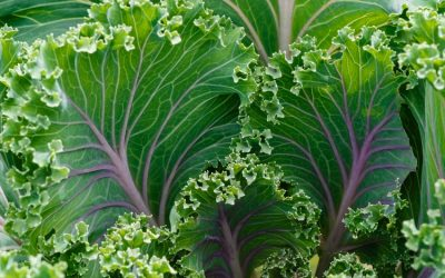 Gardening Guide: How To Grow Kale From Seed