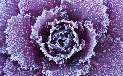 How To Save Your Garden From Frost