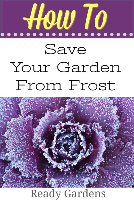 It's important to take preventative measures in the garden before the next frost. Here are some tips to saving your garden.
