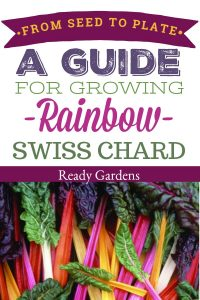 Known for its beautiful green leaves and colorful stalks, rainbow swiss chard is a great substitute for spinach.  It can be steamed or eaten raw in a salad for an extra kick of nutrition.  If you love this tasty leafy green, this guide is for you! Take your rainbow swiss chard from seed to plate!