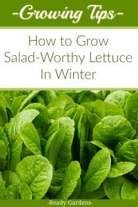"Nothing beats a crisp fresh green salad.  Not only is it a mood booster during those ""cabin fever"" days, but it is a reminder of the beauty of summer during the cold winter months.  If you love fresh homegrown lettuce even when it's cold outside, this guide is for you."
