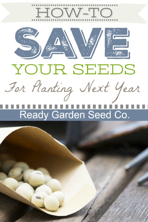 One of the most important questions many have while on a path to a more self-sufficient life is how to save their seeds year to year.  Once you've become a pro, you'll be spending much less time shopping and more time enjoying the simple life.