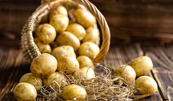 Potatoes are not only a hearty winter staple, but they are fairly easy to grow and will last all winter if stored properly. Because of their usefulness, we've put together a few tips and tricks that will help you store your potatoes all winter for the best soups, casseroles, and holiday mashed potatoes. #ReadyGardens