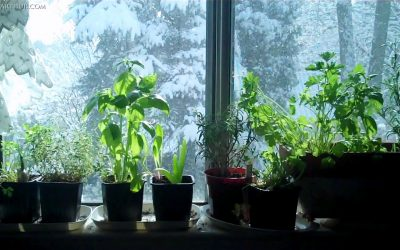 3 Plentiful And Easy Ideas For Indoor Winter Gardening