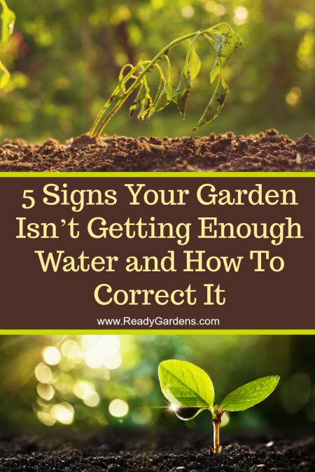 If the plants in your garden are not getting enough water, then they are also not getting enough nutrients to grow. Underwatering your plant is one of the worst things that can happen to your garden, but there are a few simple ways to tell if this is the case and we've got a few suggestions to make sure it never happens again!