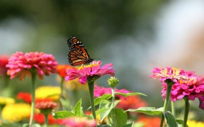 10 Pollinator-Friendly Plants You Need To Attract Pollinators For Gardening Success