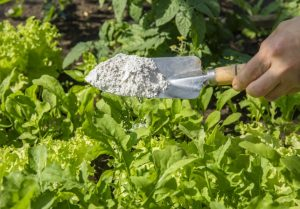Gardeners are often given the advice to sprinklediatomaceous earth(DE) around plants to deter pests. But what is DE? How does it help? Is it harmful? We'll answer all those questions and more hopefully!