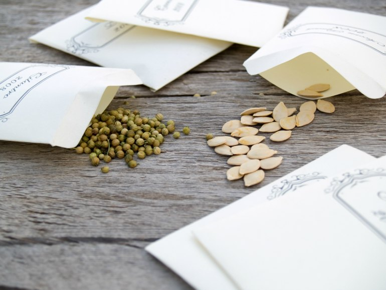 The Best Way To Store Vegetable Seeds For Long-Term